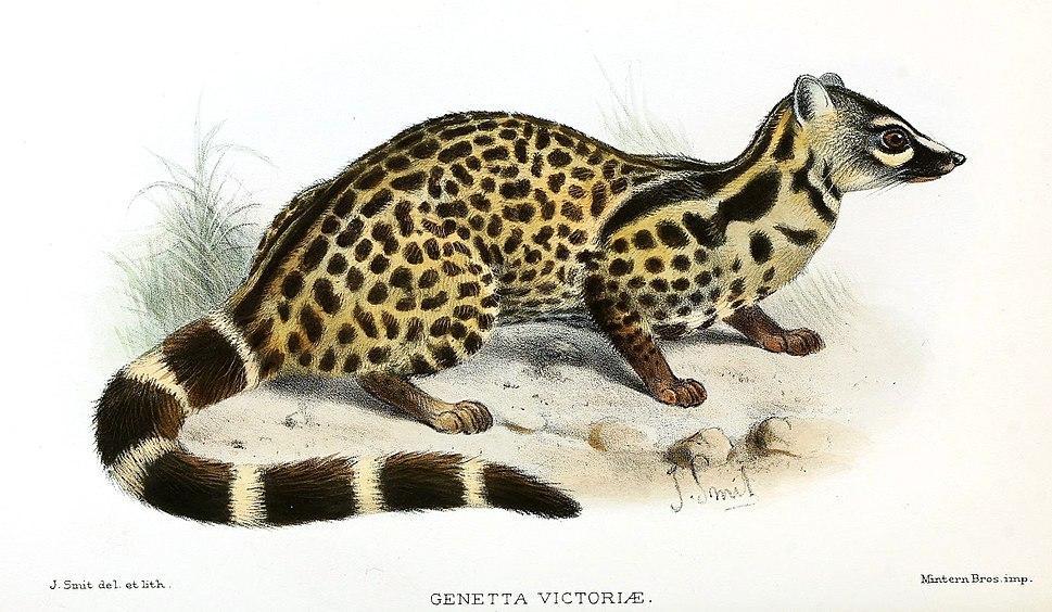 GenettaVictoriaeSmit