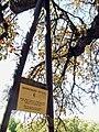 Geneve Vieille-ville 2011-09-09 12 57 16 PICT4528.JPG