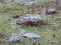 Geological reserve P. van de Lijn in Urk, Urkerbos. - panoramio (7).jpg