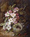 George Clare - Flowers and Bird's Nest on a Mossy Bank (14874174185).jpg