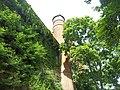 Giardino botanico di Brera (Milan) 173.jpg