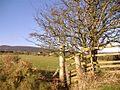Gibdale - geograph.org.uk - 103920.jpg