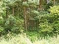 Gill Wood - geograph.org.uk - 490789.jpg