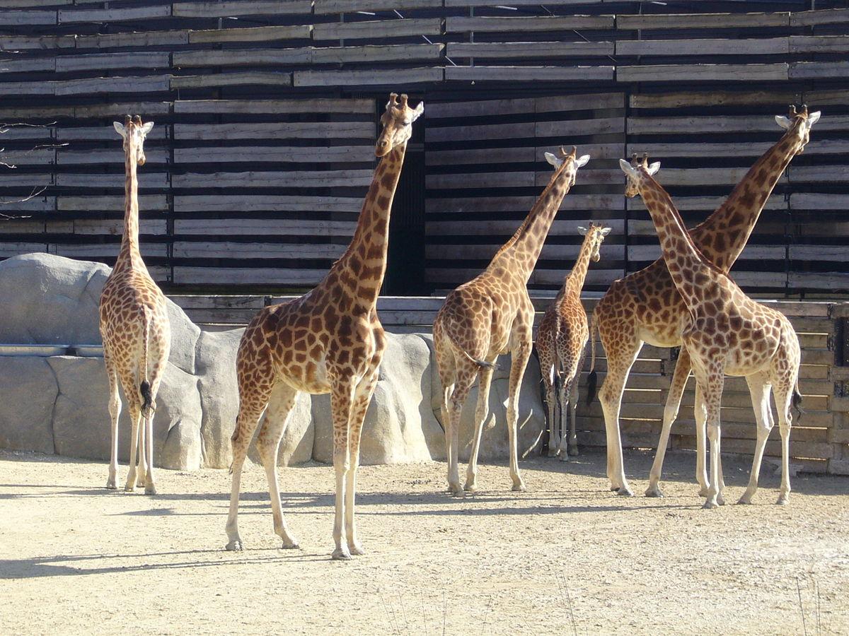 Parco Zoologico Di Parigi Wikiquote