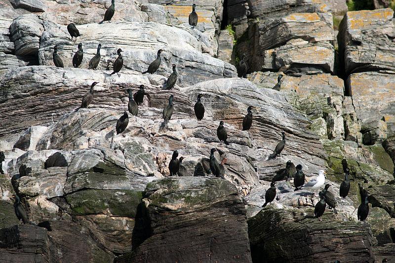 File:Gjesværstappan natural reserve-3.jpg