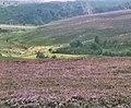 Goathland Moor - geograph.org.uk - 1160864.jpg