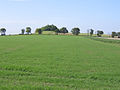 Goffers Knoll, Melbourn, Cambs - geograph.org.uk - 53046.jpg
