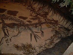 Amphicotylus - A. gilmorei skeleton