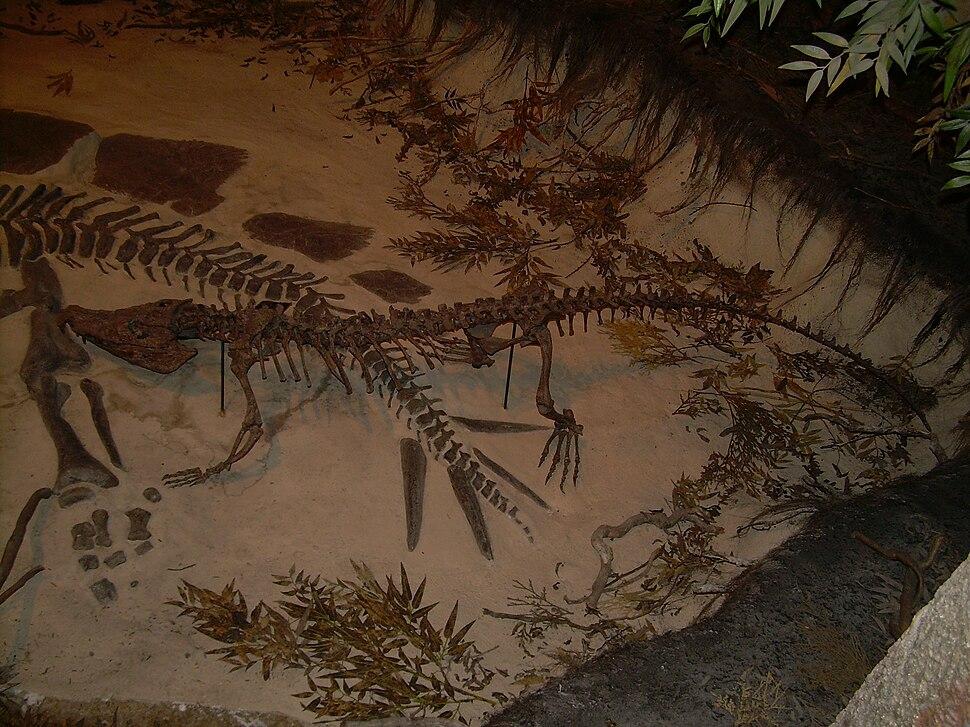 Goniopholis skeleton, Stegosaurus skeleton