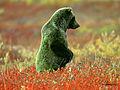 Grön grizzly björn.jpg