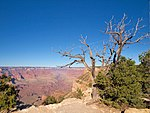File:Grand Canyon, October 2008 (2985709596).jpg