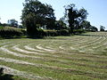 Grass windrows Allesley 1.jpg