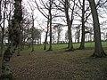 Grazed woodland, Hassendeanburn - geograph.org.uk - 914595.jpg