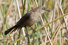 Bird perched on reeds
