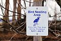 Great blue herons nesting area at Missisquoi National Wildlife Refuge (6918430456).jpg