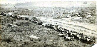 Grierson's Raid - Grierson's raiders.