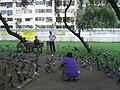 HK TST Kln Park 天台花園 Roof Garden 08.JPG