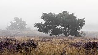 Haltern am See, Westruper Heide -- 2021 -- 4686.jpg