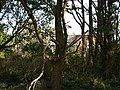 Hanworth Park House - geograph.org.uk - 62809.jpg