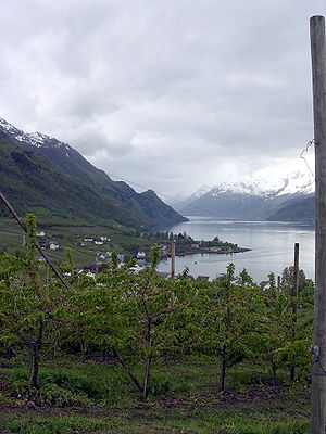 Hordaland - Hardanger is one of Norway's most important sources of fruit, providing approximately 40% of the country's fruit production, including apples, plums, pears, cherries, and redcurrants.