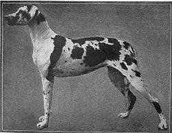Tanskandoggi Luonne