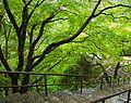 Hase-ji 長谷寺 (NARA-JAPAN) (4951354142).jpg