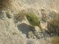 Hauza Beach resort Sharm El Sheikh Pesce Palla April 2004 - panoramio.jpg