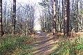 Heathland Trail near Dislingbury Road - geograph.org.uk - 1609356.jpg