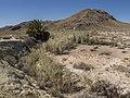 Hiking trail at Blue Point Spring (737cbf3f-7dda-485c-ab6f-2a8e8afe3b6a).jpg