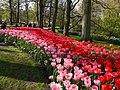 Holandia Keukenhof - panoramio (8).jpg