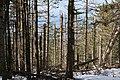 Hornisgrinde 2020-03-14 03.jpg