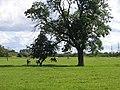 Horses grazing - geograph.org.uk - 1427888.jpg