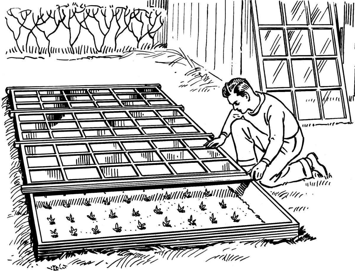 Semillero wikipedia la enciclopedia libre for Preparacion de sustrato para viveros forestales