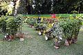 House Plant Show - Agri-Horticultural Society of India - Alipore - Kolkata 2013-11-10 4484.JPG