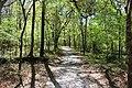 Ichetucknee Springs State Park Blue Hole Trail 3.jpg