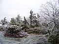 Icy Wonderland - panoramio.jpg