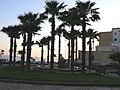 Il Delfino di Gallipoli - panoramio.jpg