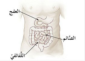 Illu small intestine-ar.jpg