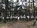 Imazu Pine Grove 18.jpg
