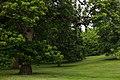 In Greenwich Park-1.jpg