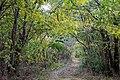 In the forest near Ubezhenskaya - panoramio (23).jpg