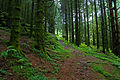In the green, old forest (5987640157).jpg