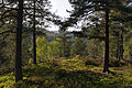 In the spring forest (5697149890).jpg