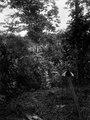 Indianskt hönhus. Övre Rio Sambú, Darién, Panamá. Etnisk grupp, Emperá-Chocó. Kilché, 442 - SMVK - 003978.tif