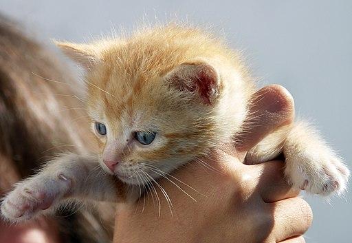 Iris cat