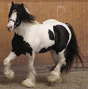 Piebald - A piebald horse, Tobiano pattern