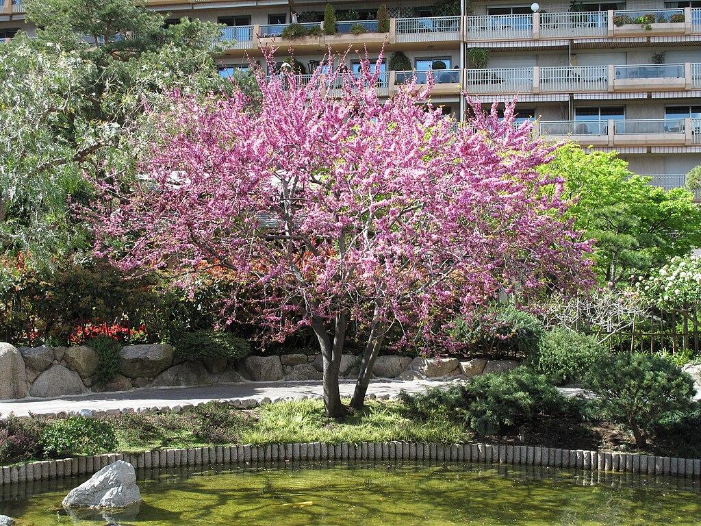 Japanese garden Monaco4