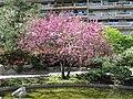 Japanese garden Monaco4.jpg