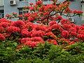 Jardim da Vitoria 薇多莉亞花園 - panoramio.jpg