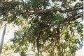 Jardin de Pamplemousses (3001707290).jpg